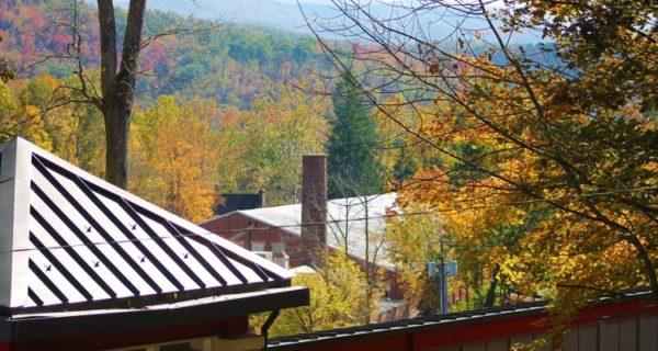 fall-leaves4-750x400-1